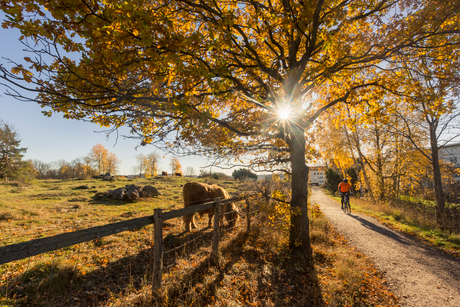 Farm in Jarfalla, Swedenの写真素材 [FYI02208071]