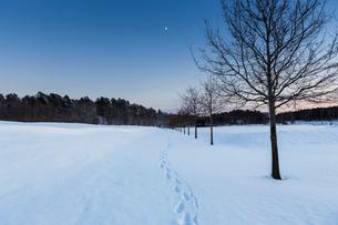 Footprints in snow in Jarfalla, Swedenの写真素材 [FYI02208156]