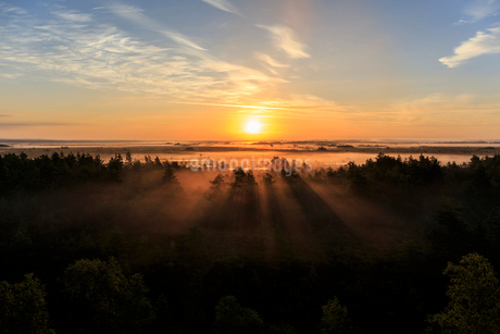 Dawn over fields with trees in Narke, Swedenの写真素材 [FYI02208232]