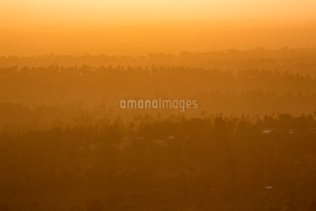 Forest at sunset in Kenyaの写真素材 [FYI02208347]