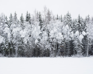 Snow covered forest in Smaland, Swedenの写真素材 [FYI02208439]