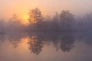 Trees at sunrise in Knuthojdsmossen, Swedenの写真素材 [FYI02208473]