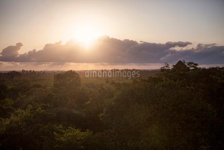 Sunset over trees in Kenyaの写真素材 [FYI02208586]