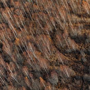 Aerial view of forest in Uppland, Swedenの写真素材 [FYI02208598]