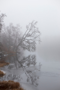 Trees on shore of lake in Smaland, Swedenの写真素材 [FYI02208613]