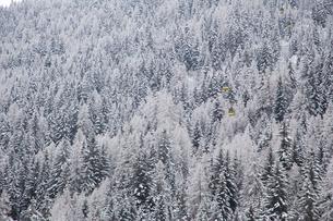 Snow on trees in La Thulie, Italyの写真素材 [FYI02208648]