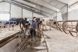 Sweden, Skane, Female dairy farmer at workの写真素材 [FYI02208724]
