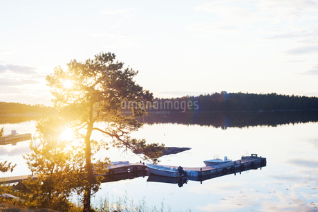 Tree by harbor at sunset in Aspo, Swedenの写真素材 [FYI02208748]