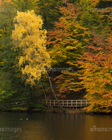 Autumn trees at Soderasens National Park in Skane, Swedenの写真素材 [FYI02208808]