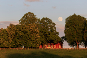 Trees on a farm in Trantorp, Swedenの写真素材 [FYI02208843]
