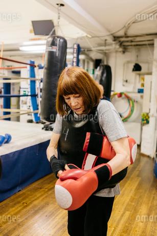 Senior woman putting on boxing glovesの写真素材 [FYI02208924]