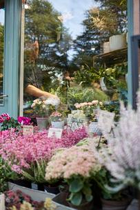 Sweden, Florist working in flower shopの写真素材 [FYI02208969]