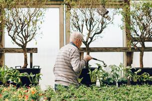 Garden centre worker watering gardenの写真素材 [FYI02209019]