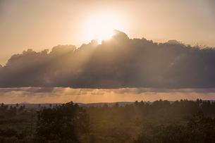 Sunset over trees in Kenyaの写真素材 [FYI02209040]