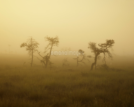 Sweden, Smaland, Store Mosse National Park in fogの写真素材 [FYI02209175]