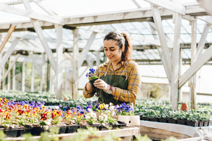 Garden centre worker checking plantsの写真素材 [FYI02209333]