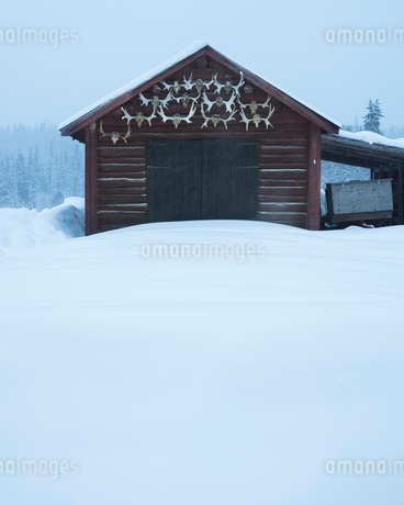 Antlers on log cabin in Dalarna, Swedenの写真素材 [FYI02209346]