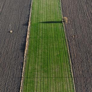 Aerial view of field in Uppland, Swedenの写真素材 [FYI02209349]