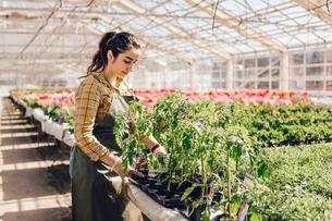 Garden centre worker checking plantsの写真素材 [FYI02209354]