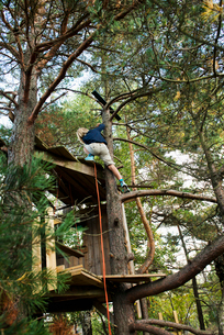 Boy in a tree houseの写真素材 [FYI02209465]