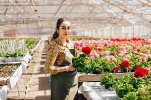 Garden centre worker holding plantsの写真素材 [FYI02209511]