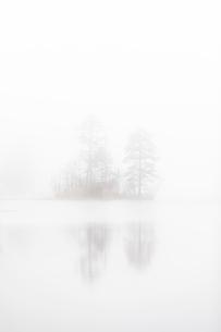 Trees under fog on Lake Skiren, Swedenの写真素材 [FYI02209572]