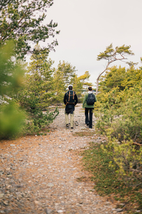 Rear view of couple hiking in Sodermanland, Swedenの写真素材 [FYI02209626]