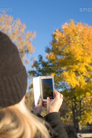 Woman taking photograph of treeの写真素材 [FYI02209709]