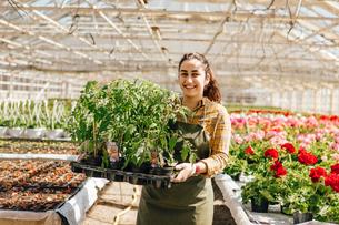 Garden centre worker holding plantsの写真素材 [FYI02209721]