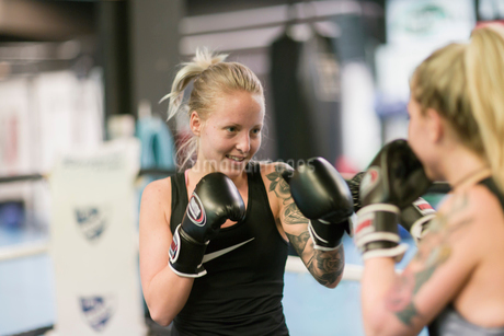 Two women sparring in a boxing classの写真素材 [FYI02209738]