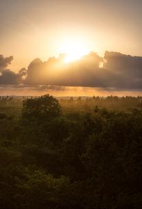 Sunset over trees in Kenyaの写真素材 [FYI02209817]