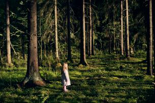 Finland, Paijat-Hame, Heinola, Girl (4-5) standing in spruce forestの写真素材 [FYI02210010]