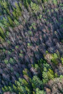 Aerial view of forest in Sundbro, Swedenの写真素材 [FYI02210089]