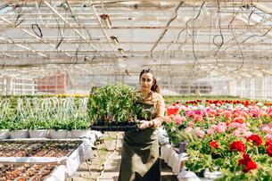 Garden centre worker holding plantsの写真素材 [FYI02210272]