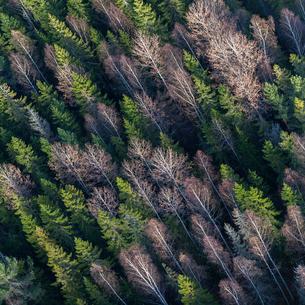 Aerial view of forest in Sundbro, Swedenの写真素材 [FYI02210408]