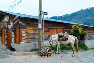 Horse next to bundle of sticks in San Juan, Guatemalaの写真素材 [FYI02210419]