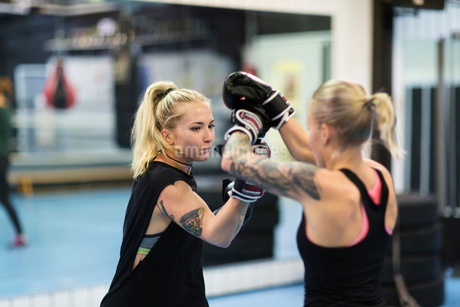 Two women sparring in a boxing classの写真素材 [FYI02210514]