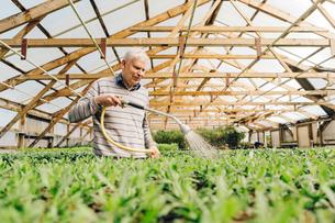 Garden centre worker watering gardenの写真素材 [FYI02210650]