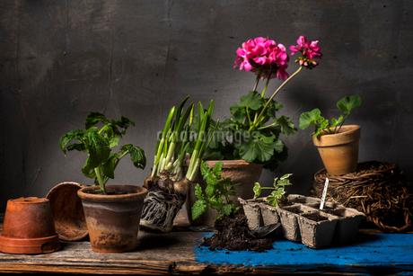 Assorted pots and plantsの写真素材 [FYI02210686]