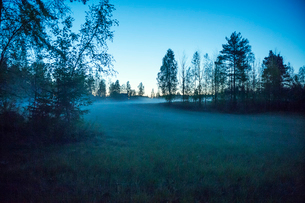 Mist field at dawn in Dalarna, Swedenの写真素材 [FYI02210709]