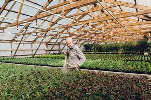 Garden centre worker watering gardenの写真素材 [FYI02210719]