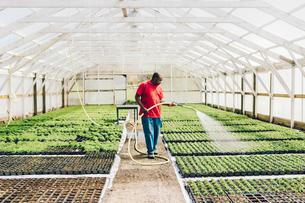 Garden centre worker watering gardenの写真素材 [FYI02210733]