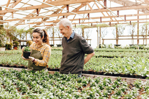 Garden centre worker talking to senior manの写真素材 [FYI02210806]