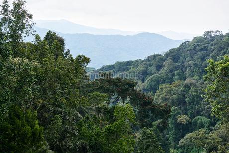 Nyungwe Forest in Rwandaの写真素材 [FYI02210831]