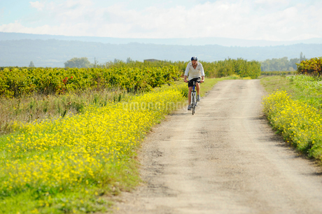 Mid adult man riding a bicycle in Vaucluse, Franceの写真素材 [FYI02210984]