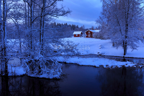 Bare trees by river during winter in Swedenの写真素材 [FYI02211023]