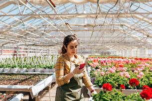 Garden centre worker on smart phoneの写真素材 [FYI02211095]
