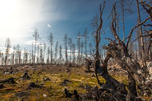 Burnt forest in Angelsberg, Swedenの写真素材 [FYI02211185]