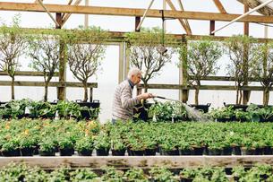 Garden centre worker watering gardenの写真素材 [FYI02211269]