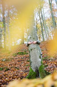 Arms of girl hugging tree in Soderasen Nature Reserve, Swedenの写真素材 [FYI02211309]